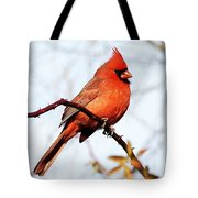 Cardinal 1 Tote Bag