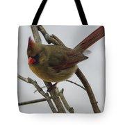 Cardinal Cold Winter Stare Tote Bag