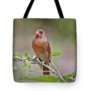 Cardinal On Pope Tote Bag