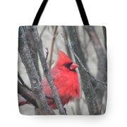 Cardinal With Fluffed Feathers Tote Bag