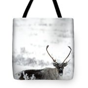 Caribou Rangifer Tarandus Dempster Tote Bag