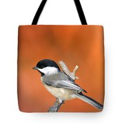 Carolina Chickadee - D007812 Tote Bag
