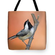 Carolina Chickadee - D007814 Tote Bag