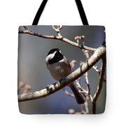Carolina Chickadee - Glamour Shot Tote Bag