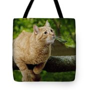 Cat Hanging On A Limb Tote Bag