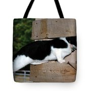 Cat Looking Thru The Knot Hole Tote Bag