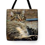Cat Nap Interuption Tote Bag
