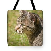 Cat Portrait On A Green Lawn Tote Bag