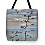 Catalina Gull And Channel Tote Bag