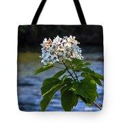 Catalpa Beauty Tote Bag