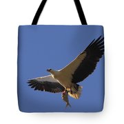 Catch Of The Day - White-bellied Sea-eagle Tote Bag