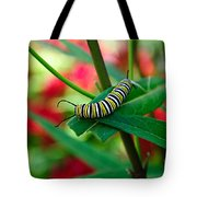 Caterpillar Before The Butterfly 1 Tote Bag