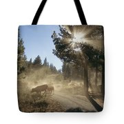 Cattle Cross A Gravel Road On A Fall Tote Bag