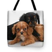 Cavalier King Charles Spaniel Puppies Tote Bag by Jane Burton