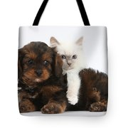 Cavapoo Pup And Blue-point Kitten Tote Bag