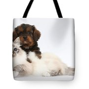 Cavapoo Pup And Tabby-point Birman Cat Tote Bag