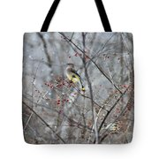Cedar Wax Wing 3 Tote Bag