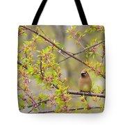 Cedar Waxwing Tote Bag