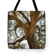 Centenarian Cork Tree Tote Bag