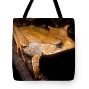 Central American Casque Headed Frog Tote Bag