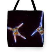 Ceratium Hirundinella Tote Bag