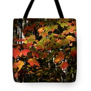 Changing Of The Colors Tote Bag