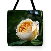 Charles Darwin Rose Tote Bag