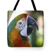 Chatty Macaw Tote Bag