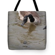 Check Out The Turtle Tote Bag