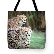 Cheetah Brothers Tote Bag