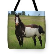 Chestnut Overo Paint Stallion Tote Bag