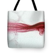 Chick Development 812 Tote Bag by Science Source