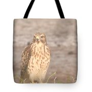Chicken Hawk 1 Tote Bag