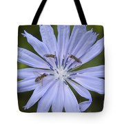 Chicory For Three Tote Bag