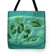 Chilodonella Protozoa Tote Bag by M. I. Walker