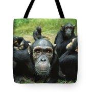 Chimpanzee Pan Troglodytes Female Tote Bag