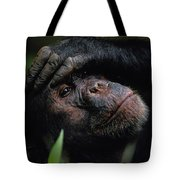 Chimpanzees, As Reported By Jane Tote Bag