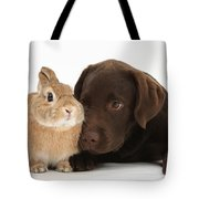 Chocolate Labrador Pup Tote Bag