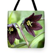 Chocolate Lilly Tote Bag