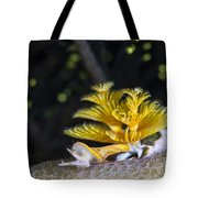 Christmas Tree Worm In Raja Ampat Tote Bag