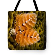 Christmas Tree Worm Spirobranchus Tote Bag