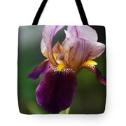 Classic Purple Two-tone Dutch Iris Tote Bag