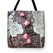 Cliff Lettuce Tote Bag