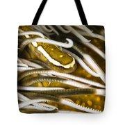 Clingfish On Crinoid, Australia Tote Bag