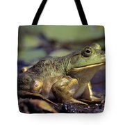 Close-up Of A Bullfrog Tote Bag
