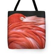 Close Up Of A Flamingo Resting Its Head Tote Bag