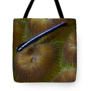 Close-up Of A Goby On Coral, Belize Tote Bag