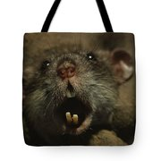Close Up Of A Rats Fast-growing Teeth Tote Bag