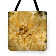 Close-up Of A Starfish Mouth Tote Bag