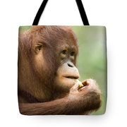 Close-up Of An Orangutan Pongo Pygmaeus Tote Bag